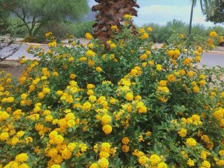 popular drought tolerant plant