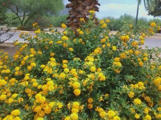 popular drought tolerant plant