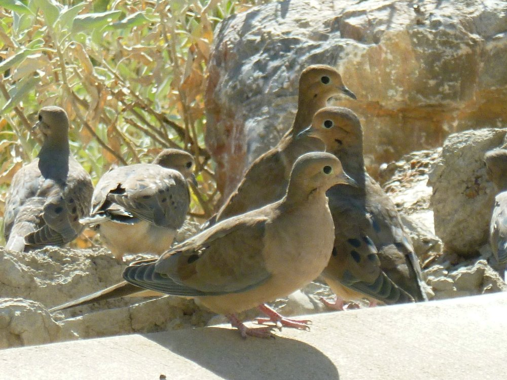 birds in Arizona