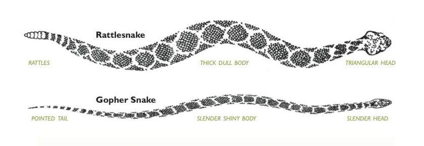 snake descriptions chart
