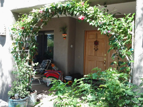 Mandevilla Vine in containers Trellis by door