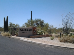 Saguaro National Park in AZ