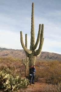60 foot Saguaro Cactus plant