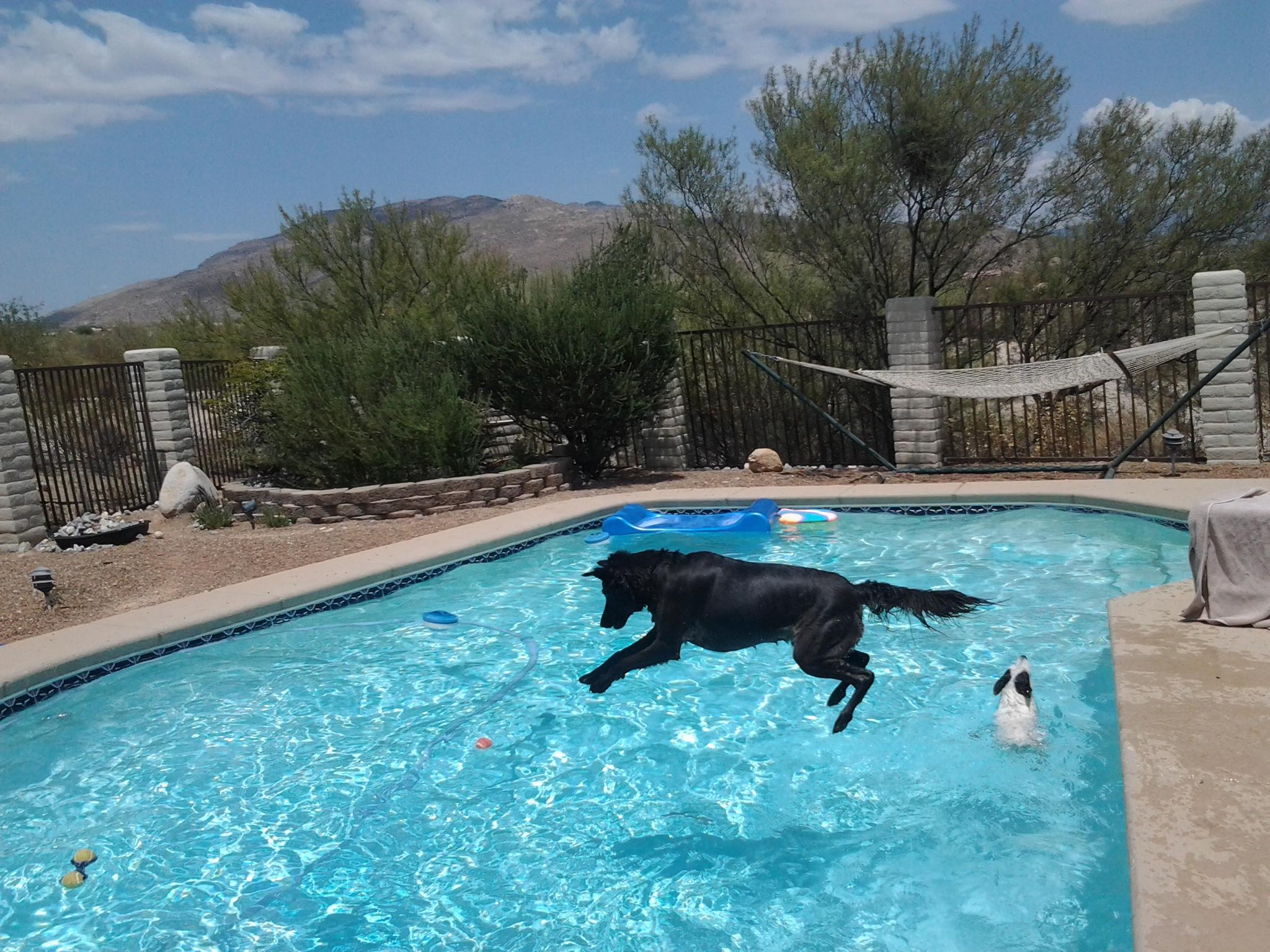 Dogs chasing ball tjs garden for Garden pool for dogs