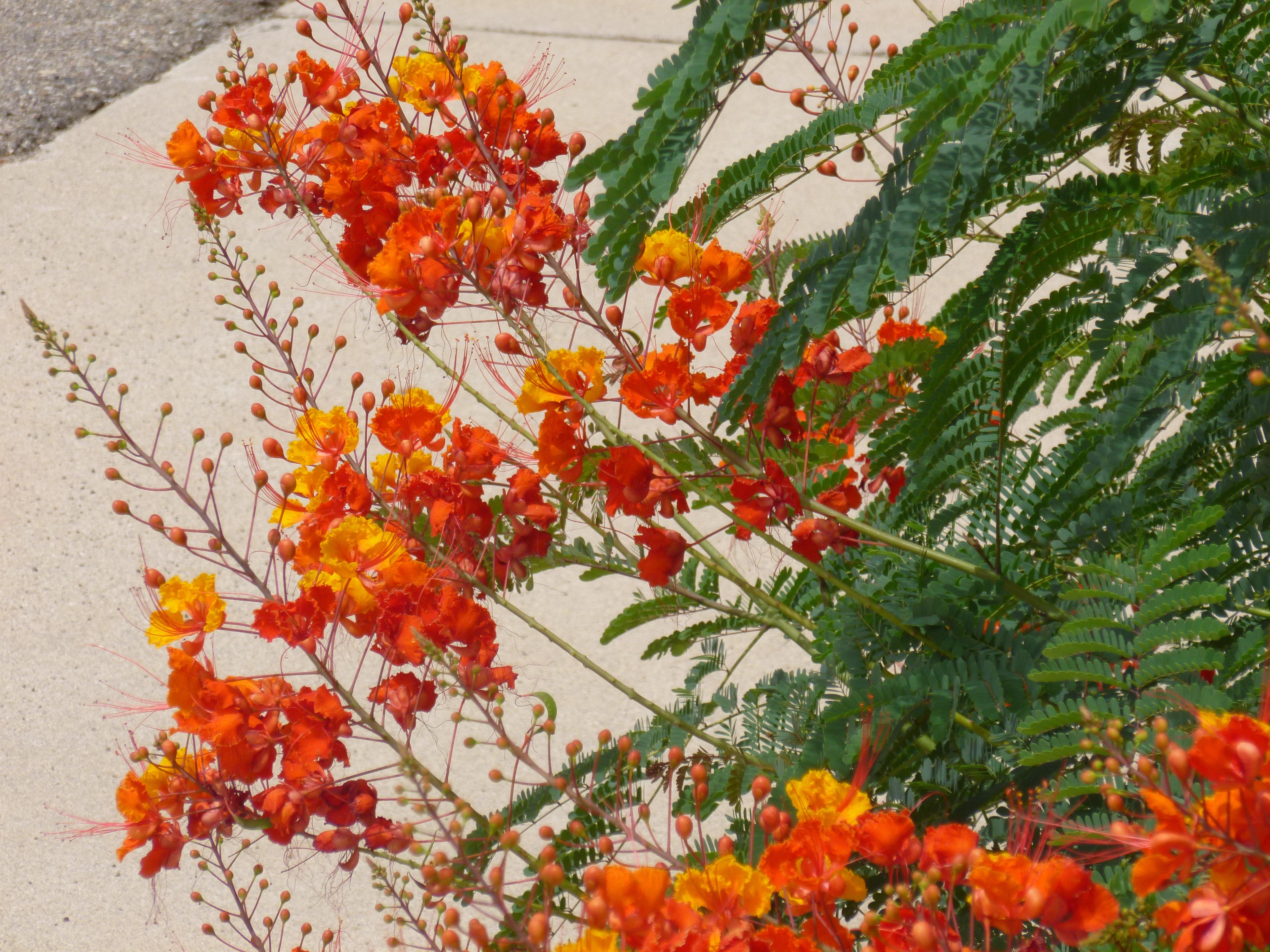 Images Of Yellow Orange Flowers Names Spacehero