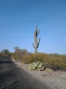 cacti in Arizona 200 years old