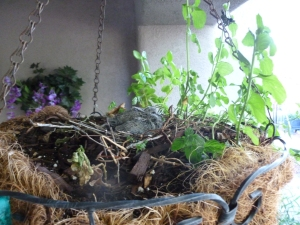new born baby doves