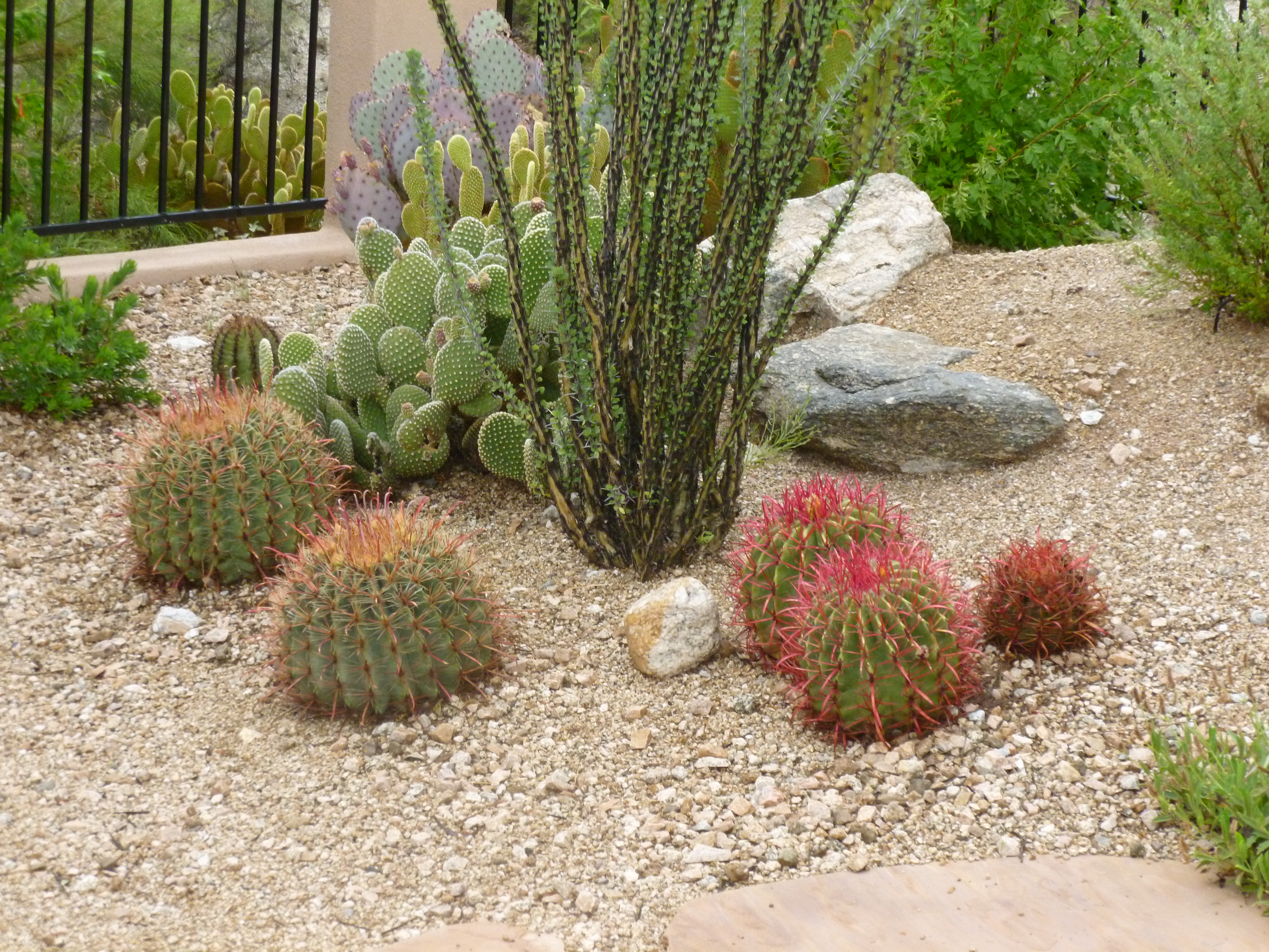 Add Cacti To Any Flowering Bush