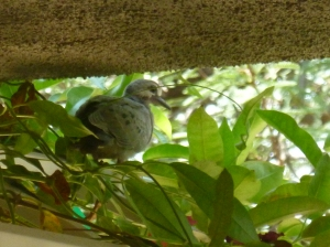 baby dove just left the nest