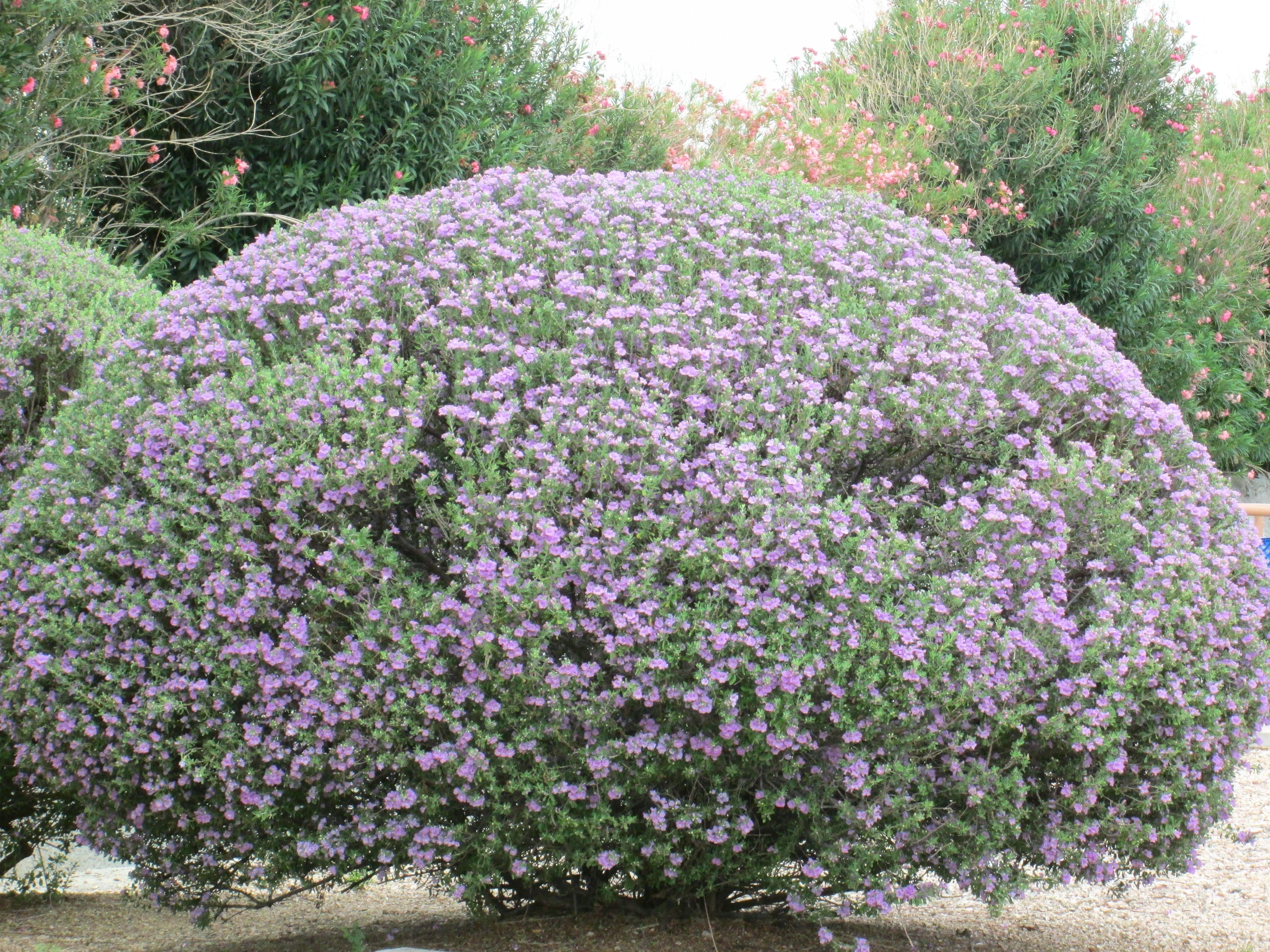 Sandra Story Best Landscaping Flowers And Shrubs