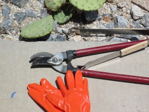 propagating cactus paddles grow cactus