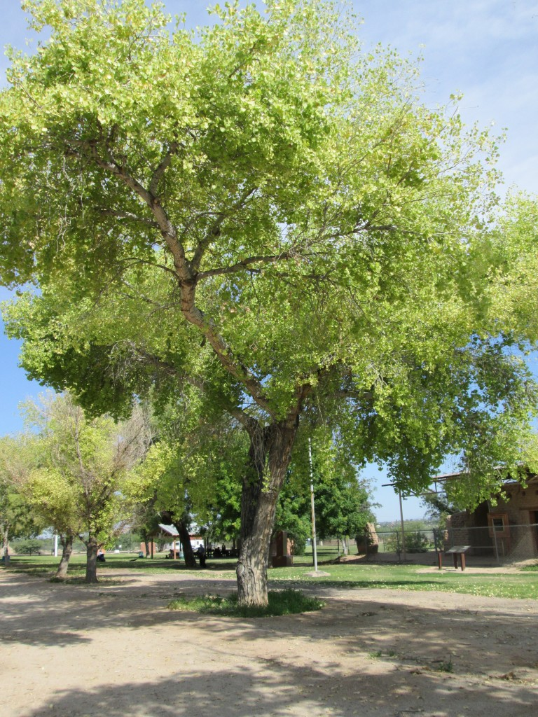 Historic Cottonwood Lane in Tucson Arizona