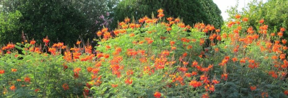 arizona desert bush orange and yellow flowers