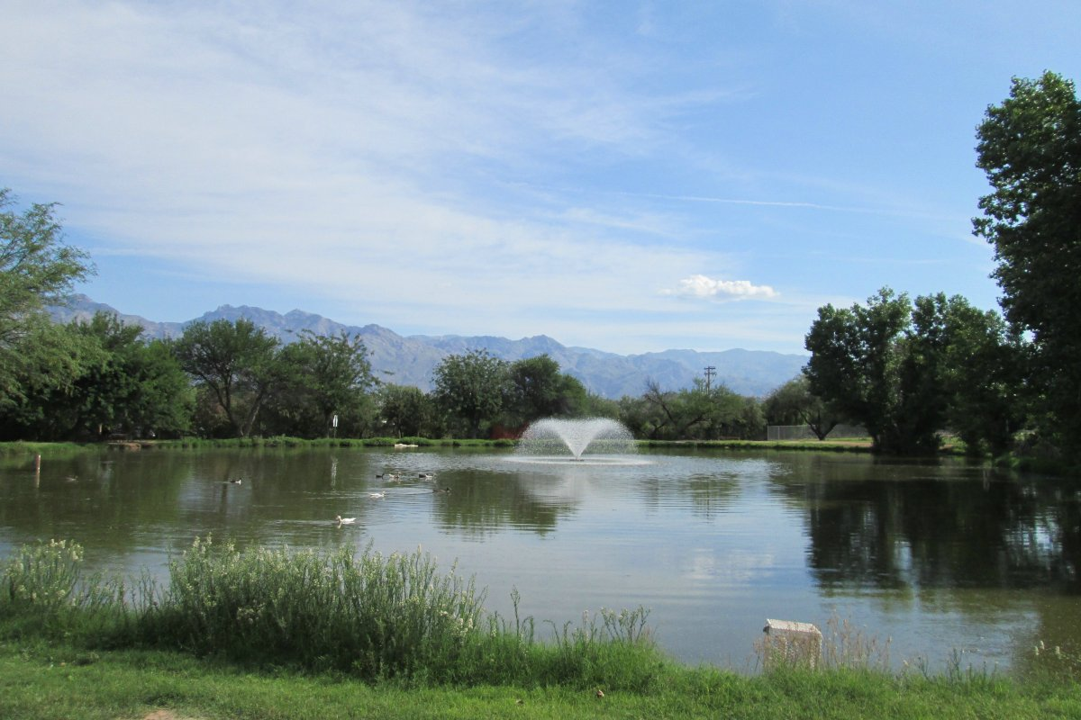 Cormorants, crested ducks, cottonwood trees and more… at Fort Lowell Park in Arizona