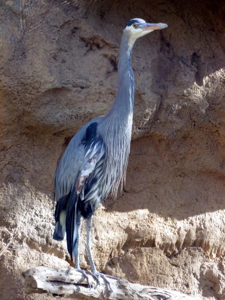 blue heron bird exhibit