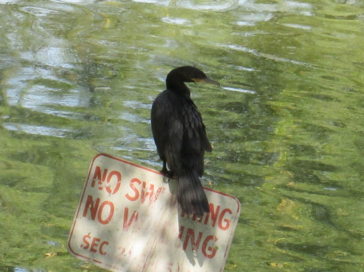 bird watching parks in Tucson Arizona