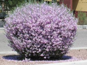purple flower bus