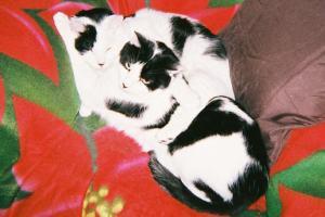 loving cats