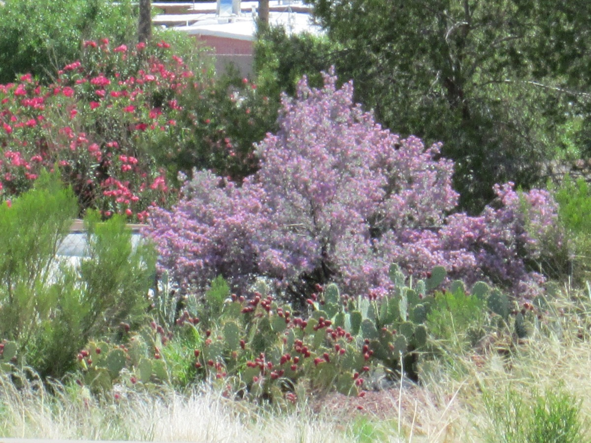 Choosing plants with colors, flowers, drought tolerant, heat resistant - white purple red orange yellow bushes