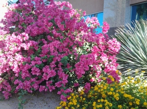 drought and heat resistant desert plant