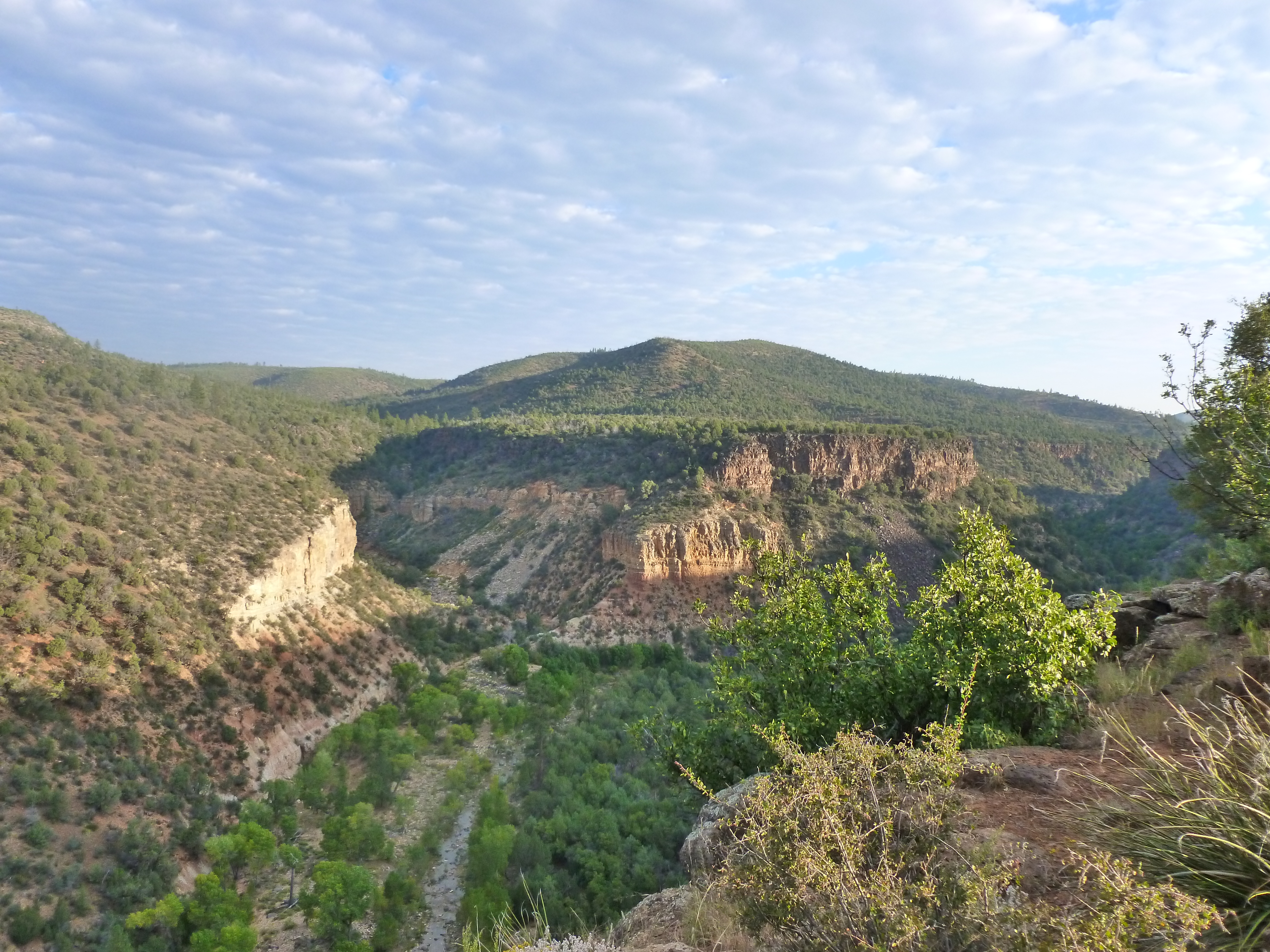 Arizona gila county pine - Cedar Canyon In Navajo County Az