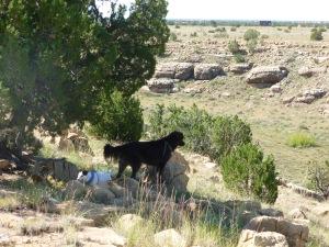 Navajo County in Arizona