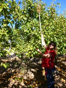 Apple Annies Orchard in Willcox Arizona
