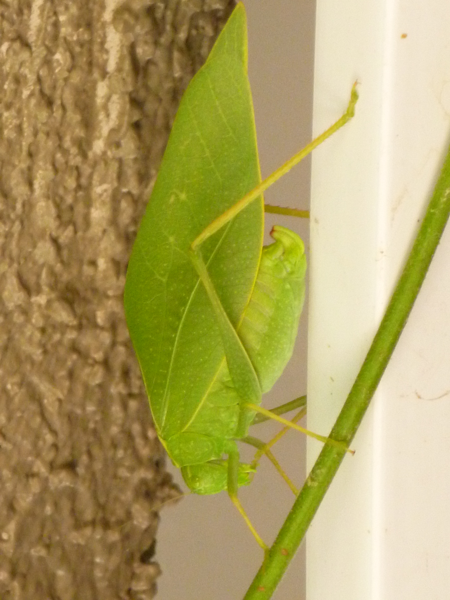 What Does A Green Leaf Bug Eat What Insect Looks Like A Green Leaf