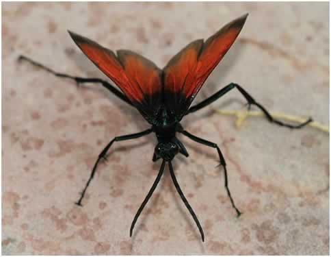 giant wasp insect