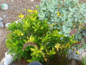 heat resistant desert plants