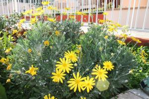 drought heat tolerant plants