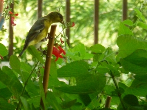 garden plants to attract birds