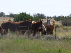 Horses in Arizona