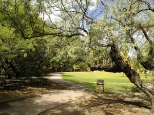 parks for picnics and rentals