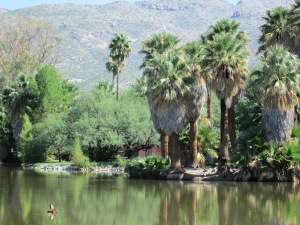 Agua Caliente Springs and Ranch