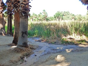 Tucson's natural spring is dry?