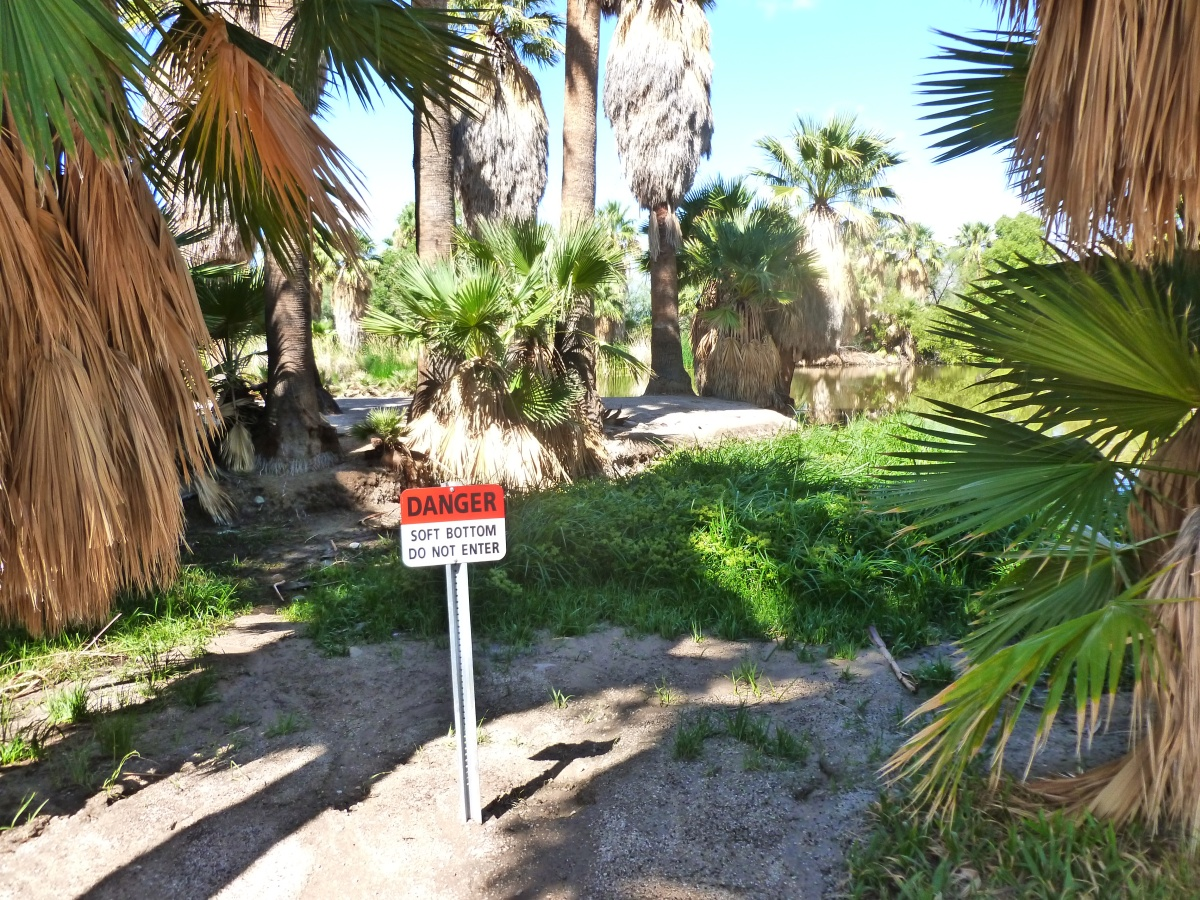 Is Agua Caliente Park and natural spring drying up?    (part 3 of 3)