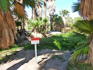 is Agua Caliente Spring drying up