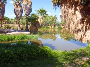 natural spring and pond in Tucson