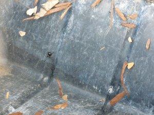 black widow spider web photo