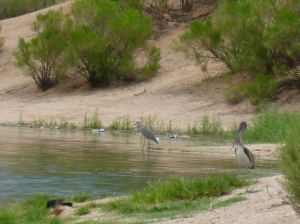 Lakeside Park Tucson Birds