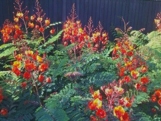 desert plant with red and orange flowers