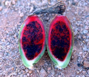 red flowers on Saguaro cactus