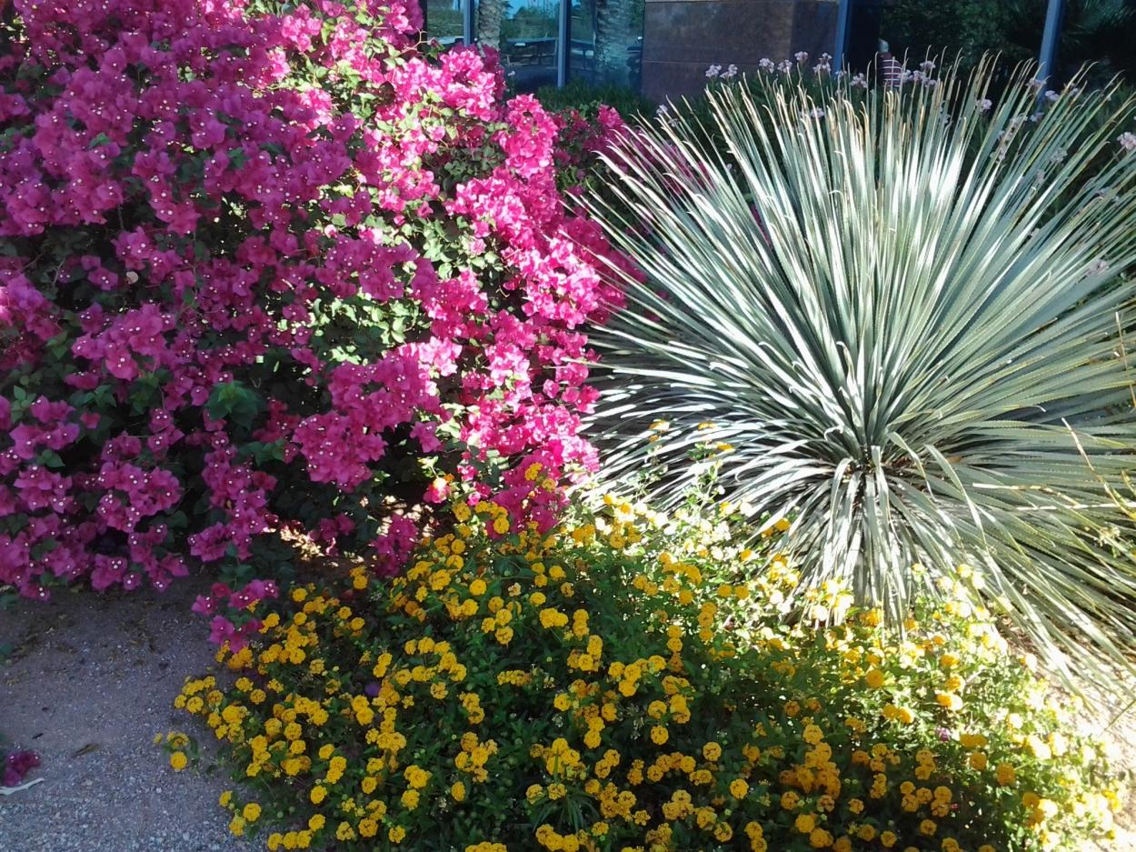 yucca cactus yellow lantana