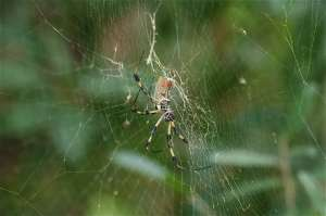 yellow striped spider on a round web