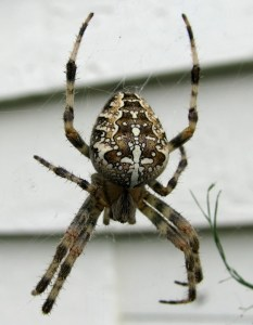 brown spider on a round web