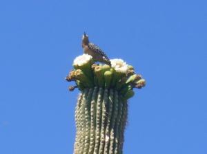 Arizona state flowers