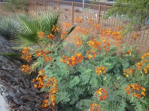drought resistant shrubs with flowers