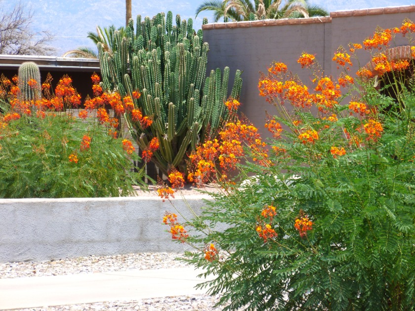 phoenix heat tolerant plant with flowers